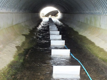 Baffles fitted, water now significantly deeper, slower and with lots of resting places