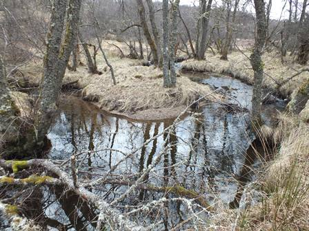 Very good habitat in the middle reaches of the burn. As in many Spey burns in this part of the catchment there is ideal growth of natural birch and alders along the banks