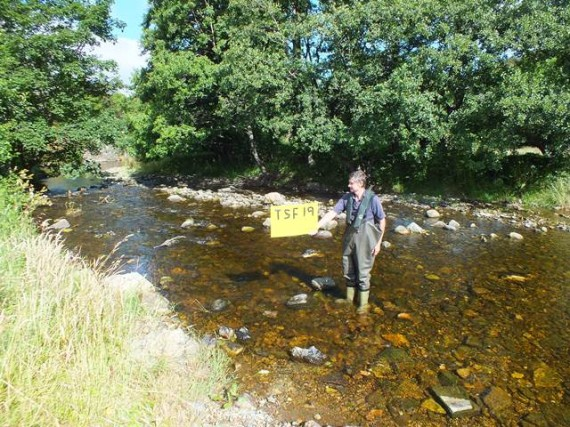 The first site of the day, just upstream of the dullan Water confluence on the Fiddich. We caught over 500 fish in the short area of water in view below Steve.