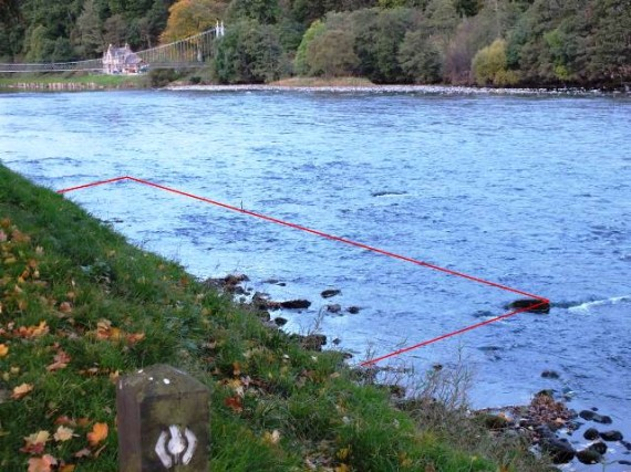 The mainstem density site at Aberlour. The site was 5m X 22m long giving an area of 112m2. We found over 150 salmon fry anf 70 parr in the area outlined by the red lines. Habitat quality is excellent with mosy boulders and the remnants of ranunculus plants.