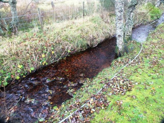 Trout redd in the Kylintra Burn near the caravan park in Grantown