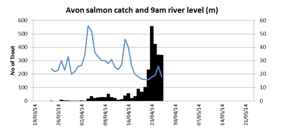 Salmon smolt catch at the Avon traps related to 9am river height