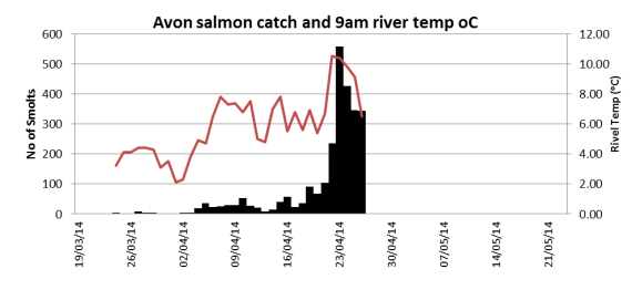 Avon salmon smolt catch related to river temperature.