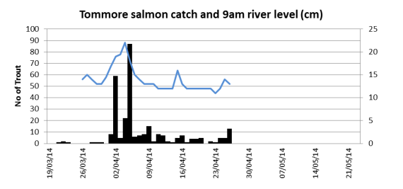 Tommore salmon catch related to burn height (cm)