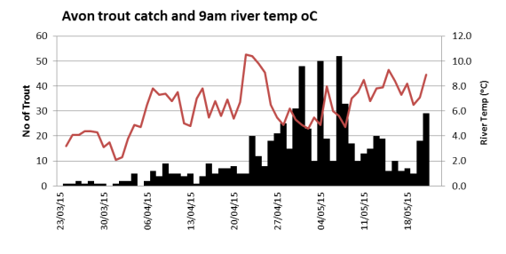 Avon trout catch related to river temperature