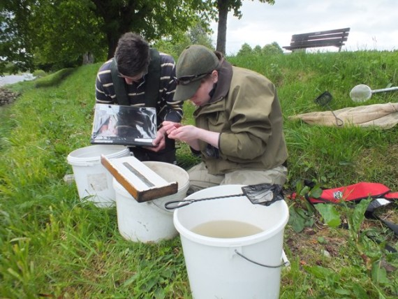 Elizabeth and Steve checking the gills for glochidia at Aberlour