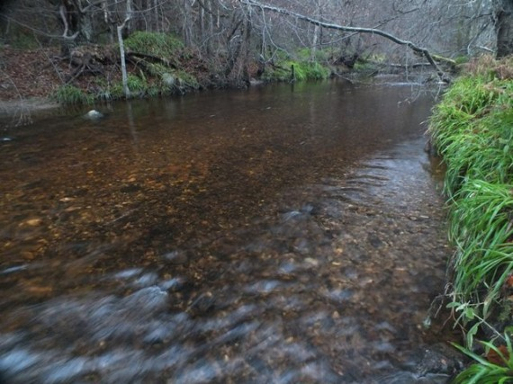 Ideal spawning gravel in the Mulben Burn. Fiush had spawned successively in this area for a number of weeks. The redd on the right of the photo being a few weeks old with fresher ones to the left