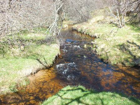 Excellent habitat in the upper Glenbeg Burn