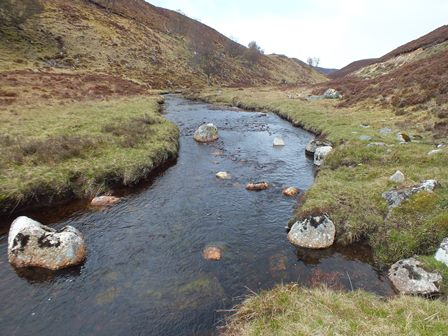 Typical habitat in the middle reaches of the Allt an Sluie