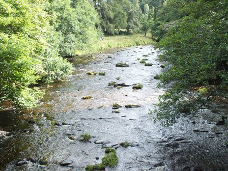 Beautiful habitat upstream of Drumin Bridge in the lower Livet. We surveyed for 3 minutes on the right side of the channel towards the top of the photo. The Livet is known to be one of the best spawning tributaries in the Spey so expectations were high. The results were good with 207 salmon fry and 14 parr. The fry and some of the parr were noticeably larger than in the Avon. We also found 8 trout fry and 2 parr, a good number for a survey in a channel that was over 25m wide.