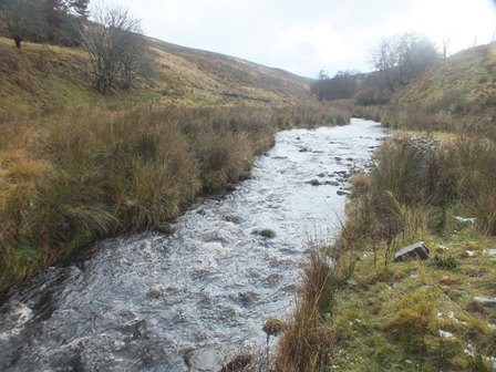 Higher gradient in the lower reaches. Not so good for spawnign but excellent parr habitat