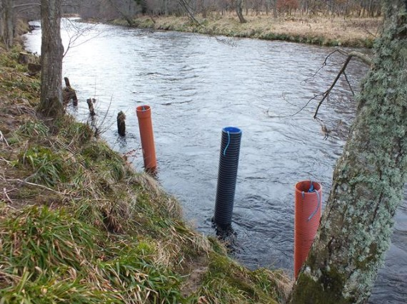 """6' lengths of pipe were fitted to three of the old wooded stakes to provide a """"berth"""" for the smolt trap"""