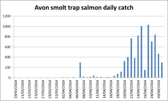 Daily salmon catch (including parr but they are only a small percentage)