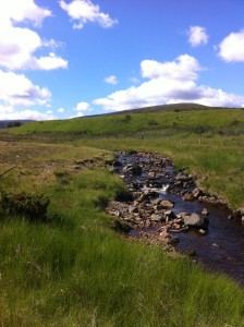 First site on the flood plain of the Burn of Brown. The sun shone the whole day!