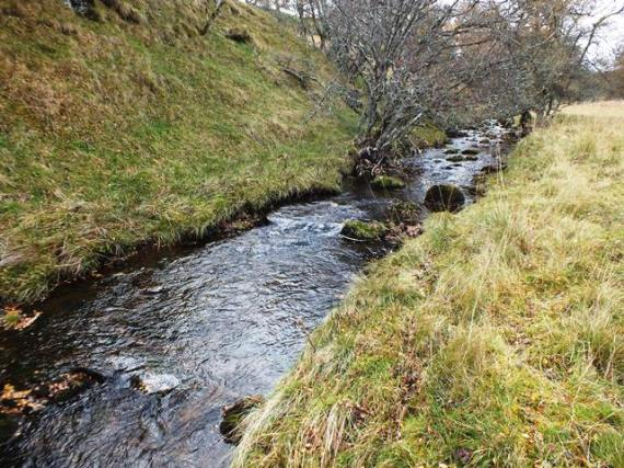 Lower, wooded section of the Iomadaigh. The burn is about 4m wide at this point and provides excellent habitat for wee fish.