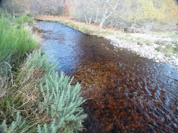 """A """"compound""""redd created by more than one pair of fish working in close proximity. There were about five reds in this fine area of spawning gravel upstream of the overland flow."""