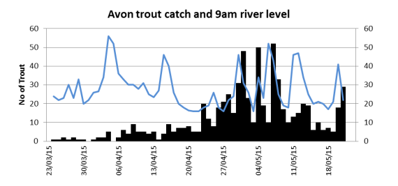 Avon trout catch related to river height