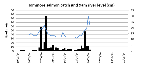 Tommore Burn water level (cm) as recorded at 9am daily and salmon smolt catch