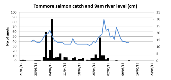 Salmnon smolt catches in the Tommore Burn trap related to the water level at 9am. The recent higher water evets have not produced many more salmon.
