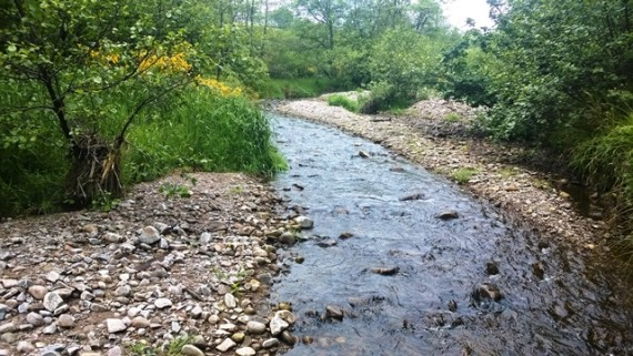 The Broad Burn upstream of the Speyburn Distillery. There is excellent spawning gravel int hsi burn and it was always known localy as an important spawning burn, especially for big sea trout. We look forward to monitoring its developpment in future years.