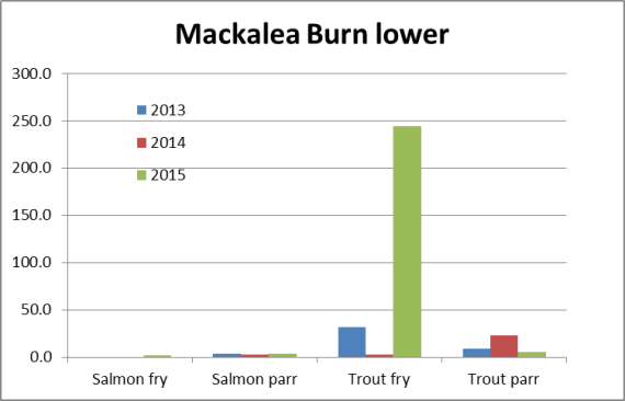 The trout fry density in the lower site was 8 times higher than recorded in 2013 and 100 times higher than in 2014.