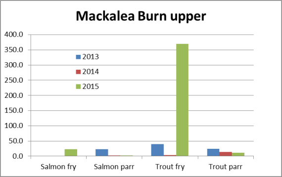 It was similar in the upper site where highre salmon fry numbers were present. It should be noted that in  site a little over 20m long we captured 164 trout fry in this sites along with 10 salmon fry. There mst be thousands of trout fry in the Mackalea Burn at present.
