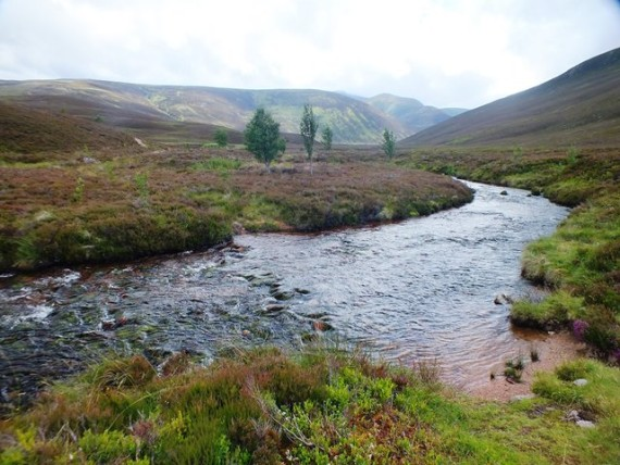 The Nethy upstream of Bynack Stable. The river was low gradient from this point upstream -perfect salmon habitat if they could get there.