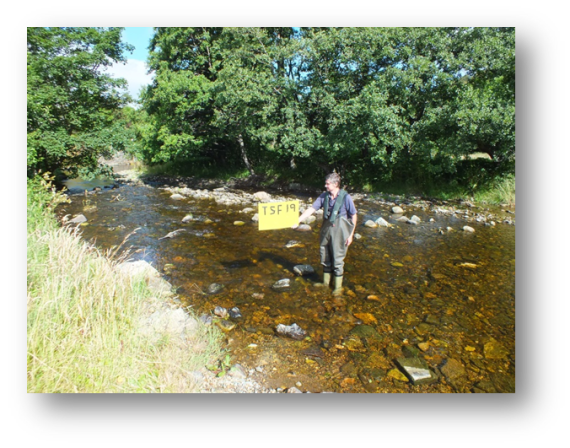 Fiddich monitoring site TSF19 which was located just above Dufftown. Before the spate thsi site supported an exceptional number of fish, we captured more that 500 during the three minute survey. Numbers were considerably reduced after the spate but not wiped out.