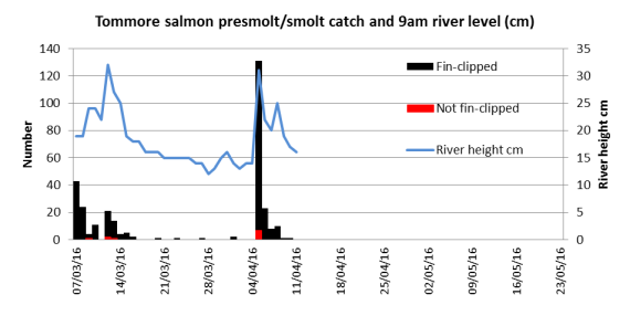 Tommore Burn trap daily catch related to river level