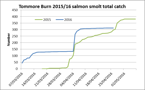 Tommore smolt trap running total 2015/2016