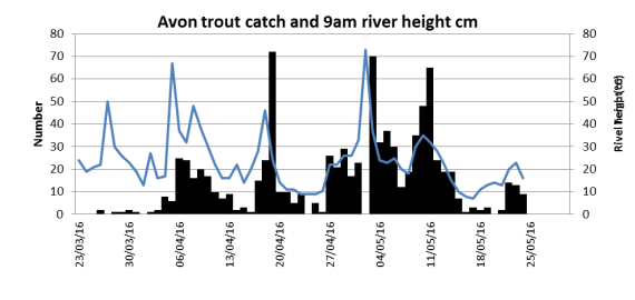 Avon trout catch related to river levels